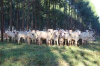 Divulgação Embrapa pecuária Sudeste