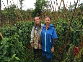 Casal de produtores com produção orgânica de pimentão. Trabalho voltado à nutrição das plantas e correção e adubação via solo, controle de pragas e doenças com produtos biológicos e alternativos .