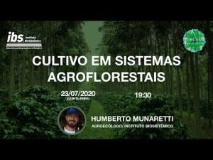 Cultivo em Sistemas Agroflorestais – 12º Encontro Virtual do Conexão Mata Atlântica
