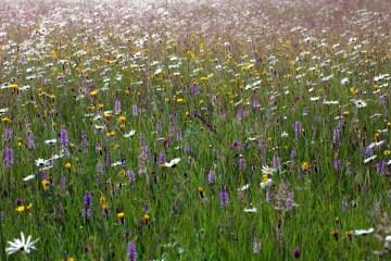 Pentwyn_Farm_Meadow,_Penallt