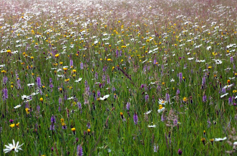 Pentwyn_Farm_Meadow,_Penallt