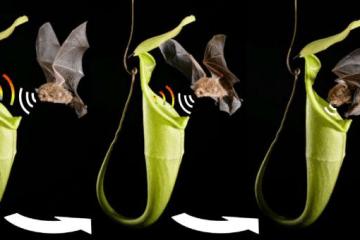 Schöner et al. Current Biology 2015. Additional images courtesy of C.C. Lee