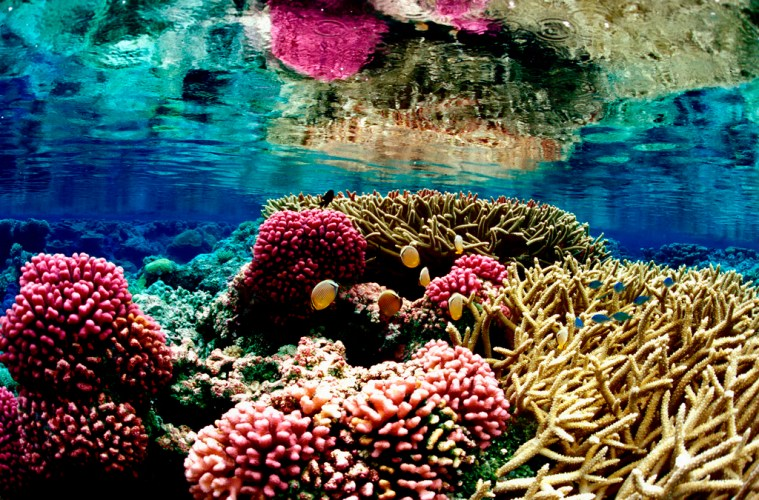 Bioerosion on coral reefs faster as oceans acidify