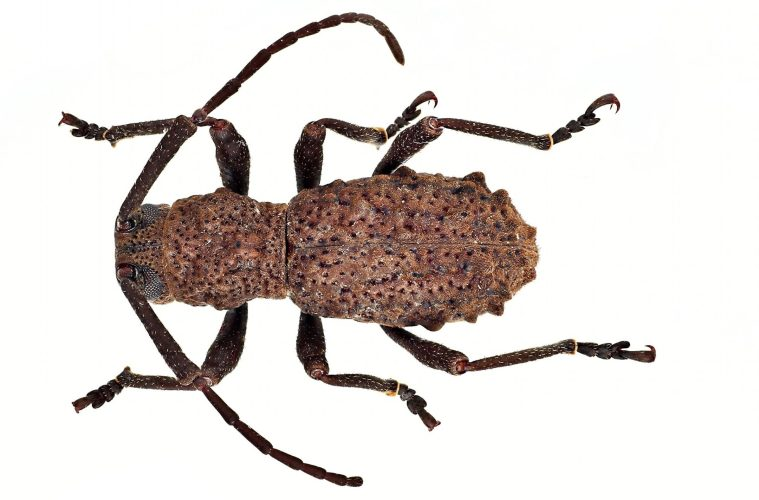 Newly discovered beetle