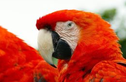 Are birds as clever as primates