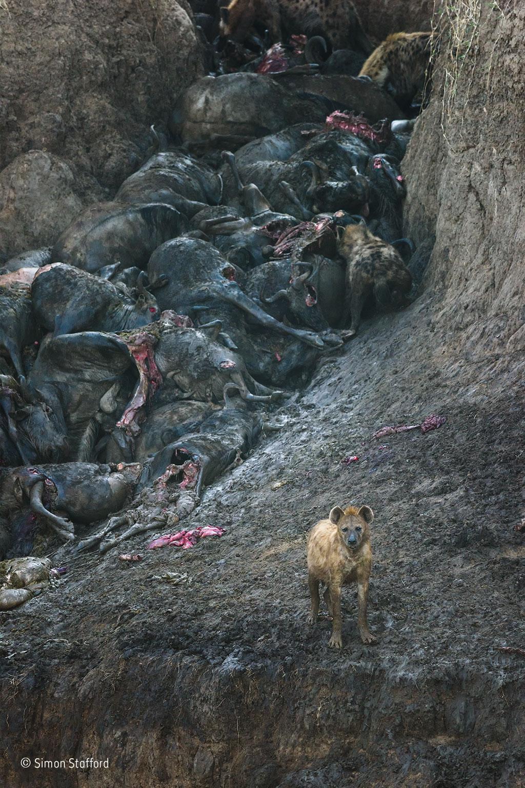 simon-stafford_wildlife-photographer-of-the-year-mammals-winner