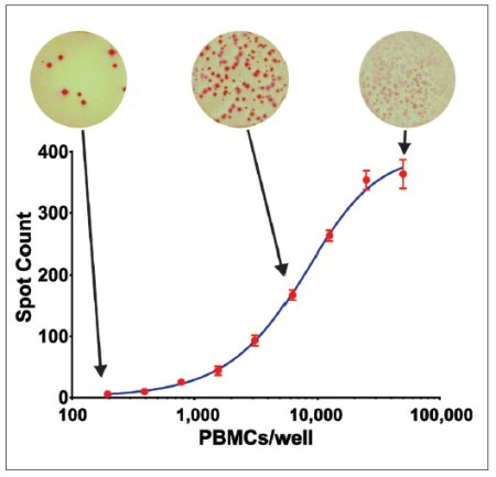Stimulation of Human Peripheral Blood Mononuclear Cells
