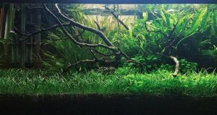 Aquascaping Ideas Archives Biotope One