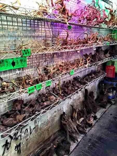 Hong Kong Fish Store Driftwood