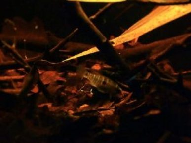 Suriname biotope