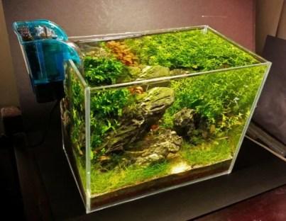 Plants Make a Tank