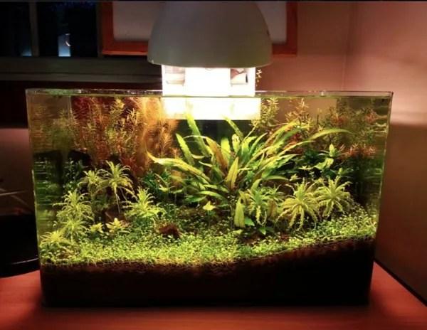 Cheap Aquarium Plants