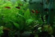 Better Terms for High and Low Tech Planted Aquariums