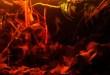Rio Atabapo Blackwater Biotope
