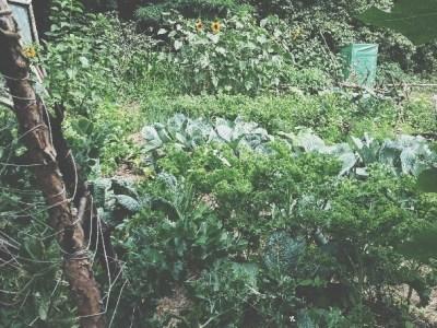 Gemüsegarten und biointensive gardening