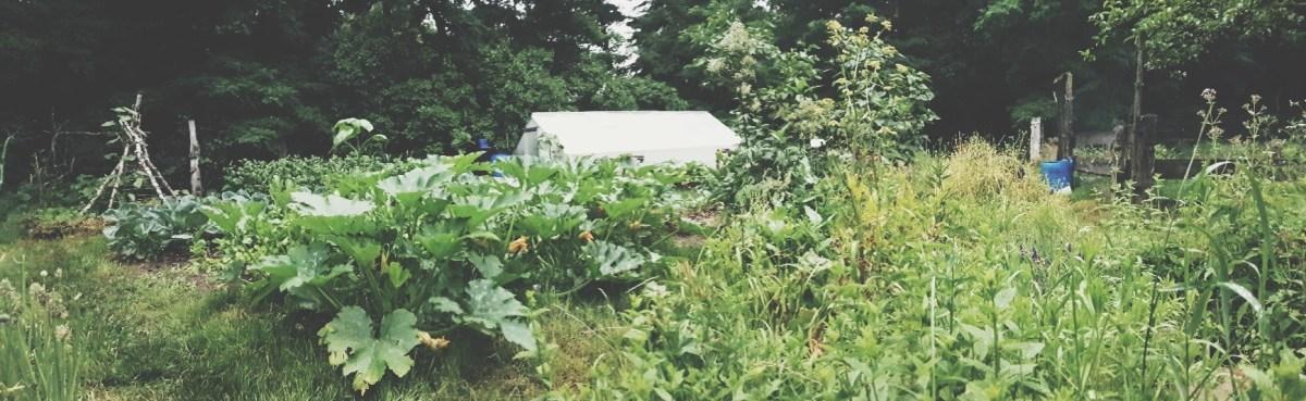 Wie 3 Tage Pro Monat Gartenarbeit Reichen Um Meine Familie Selbst Zu