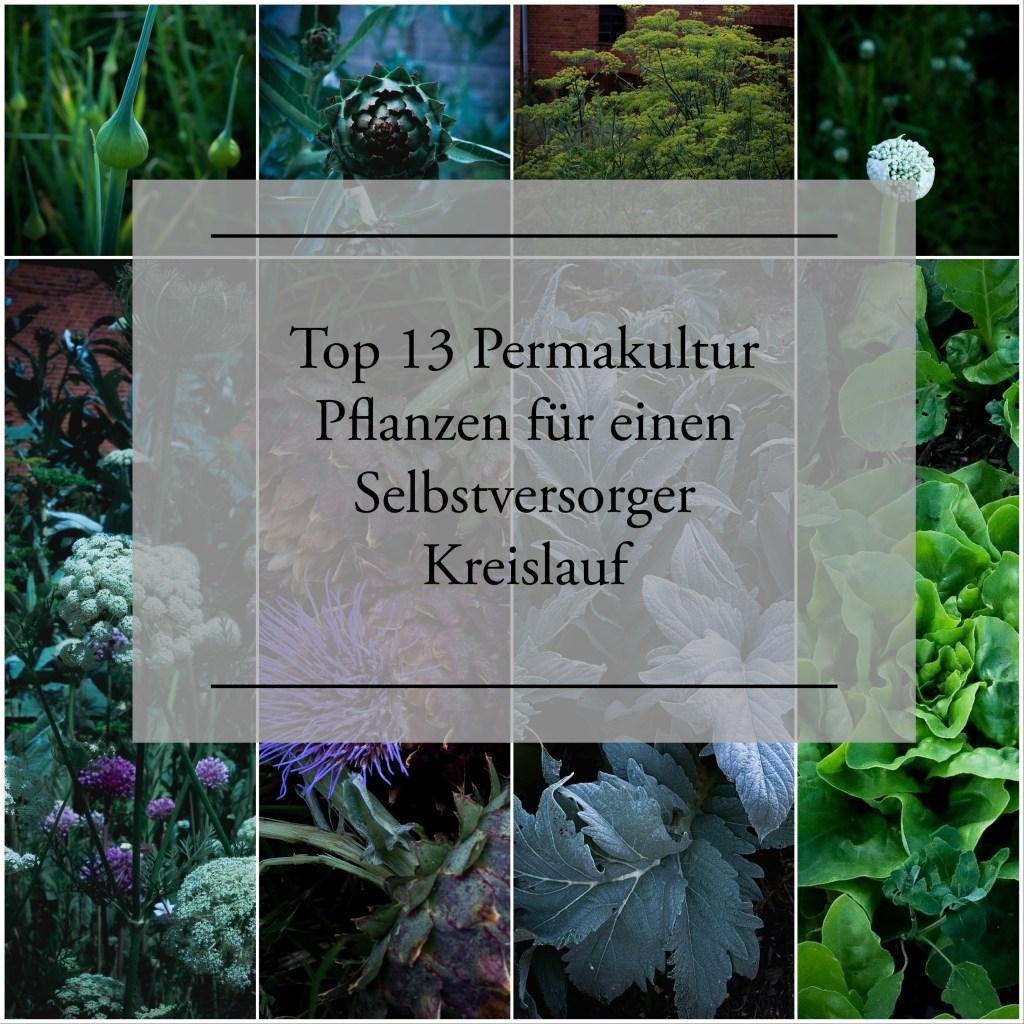 Permakultur Pflanzen für deinen Garten
