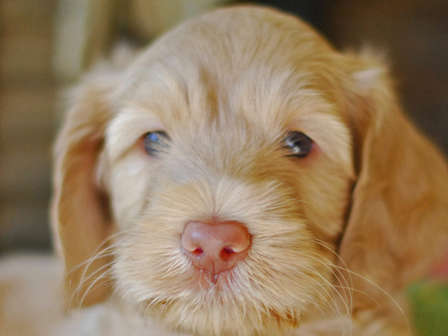 Barney-6-weeks