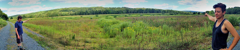 Pennsylvania cornfield