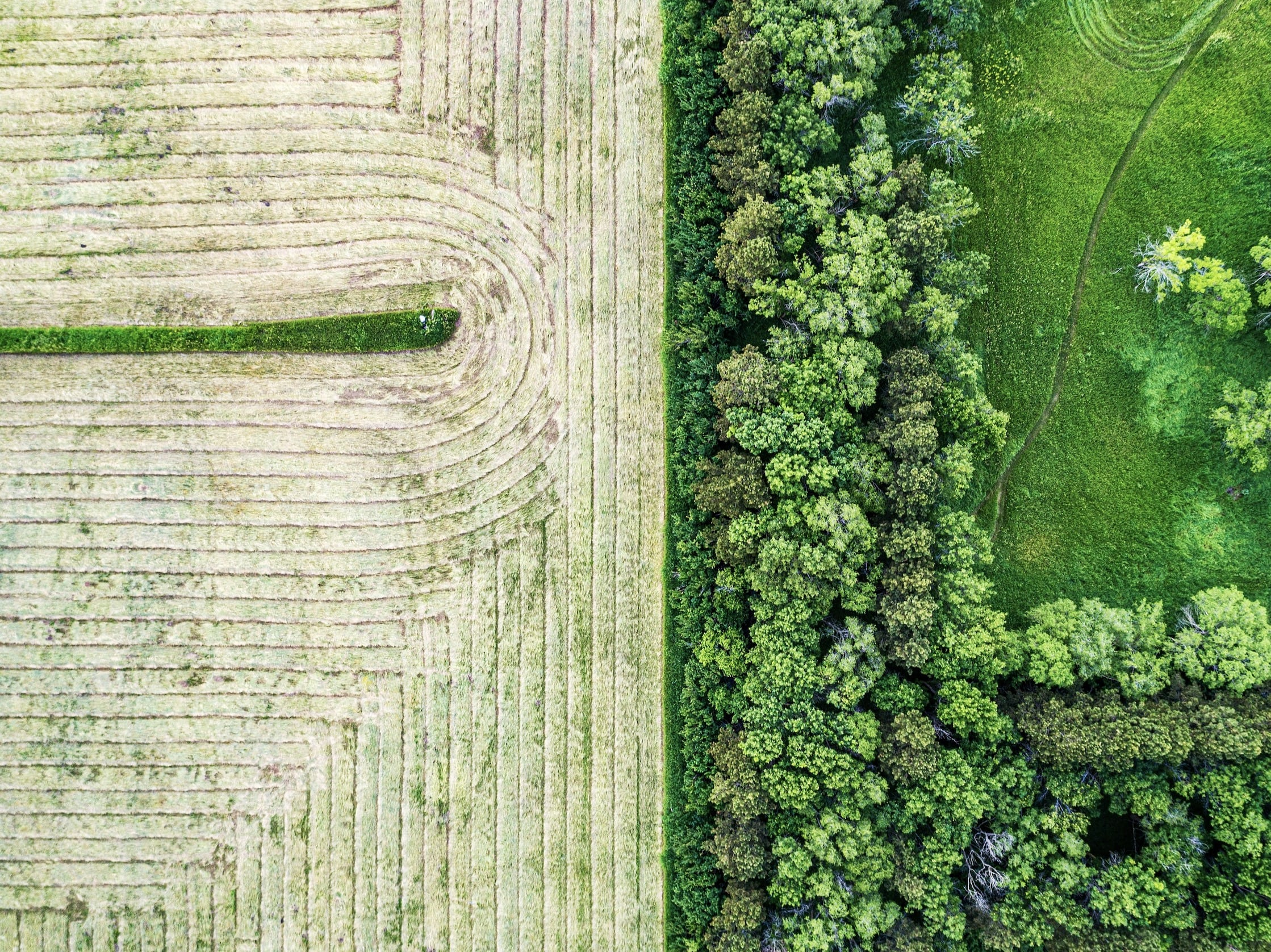 Aerial image of a field and dark green trees