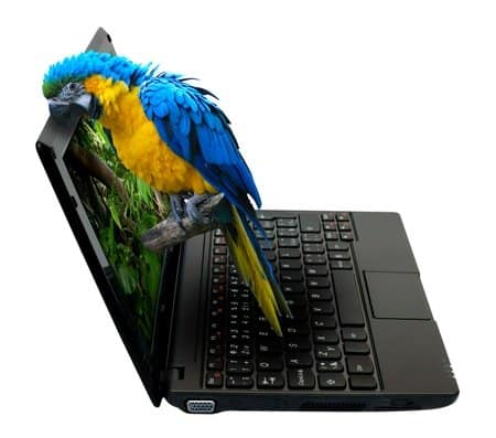 WindyCityParrot.com Privacy Policy