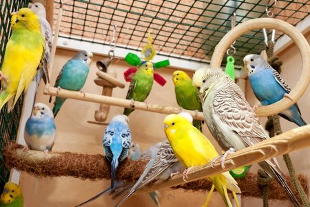 How do I stop our 6 parakeets from laying eggs and making babies?