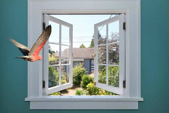 A Better Bird Ep 13 – How Bird Proof Is Your Home? Video