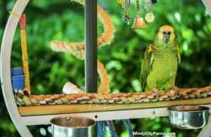Videos on easy pet bird poop removal and soft rope perches