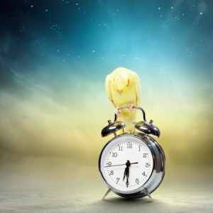 The bird of time: cognition and the avian biological (circadian) clock