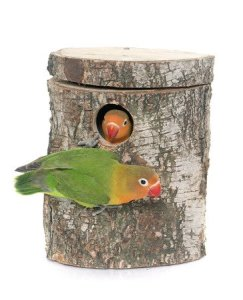 Is it normal for an Indian Ringneck to feed a Lovebird ?