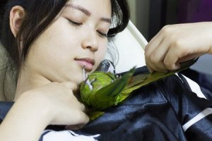 Which are the most affectionate parrots and what makes them that way?
