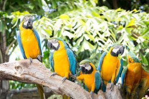 Are parrots, the god-feathers of social media?