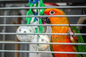 Make Bird Toys That Are Free – Cheap And Do It Yourself With These Videos