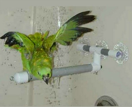 How to Get a Bird Used to a Shower Perch