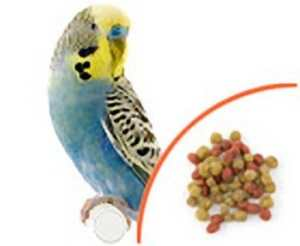Feeding conversion – Scenic bird food pellets