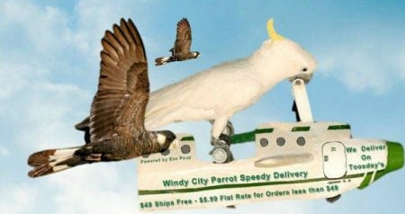 Guides to make shopping on Windy City Parrot easy & transparent