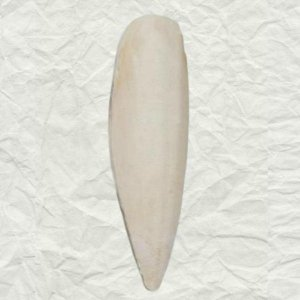 Cuttlebones A Natural Calcium Source for Birds Medium 1/4 lb (113.4 g)