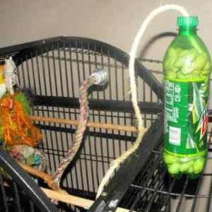 Free Bird Toy – Soda Bottle with Treats
