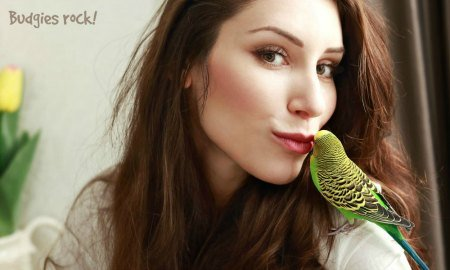 attractive woman touching a budgies beak with her lips