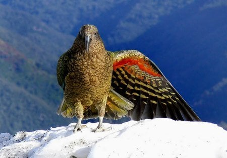 At Last, The Secret To How Do Birds Stay Alive During Winter Is Revealed