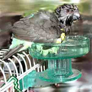 Bird Bath Exterior Cage Mount by Lixit for Small to Medium Birds