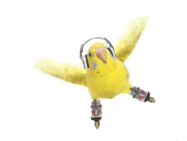 Do my budgies and cockatiels feel bored or depressed with their life of captivity?