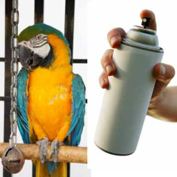 macaw inold bird cage on left spray paint can in man's hand on right
