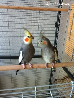 cage montana birdandyou2