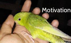 Comment rester motivé avec mon oiseau?