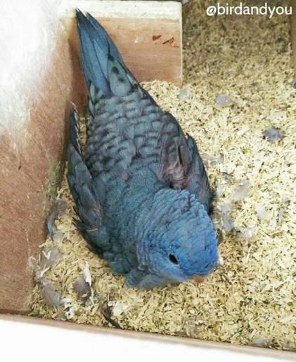 bébé perruche catherine turquoise histoire 2-10