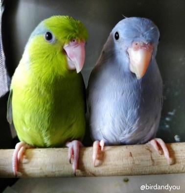couple toui celeste 2 birdandyou