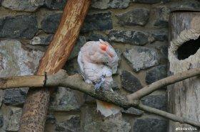 Cacatoès huppe rouge birdandyou 2