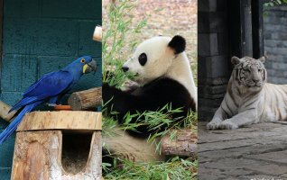Ma visite à Pairi Daiza-Parc animalier