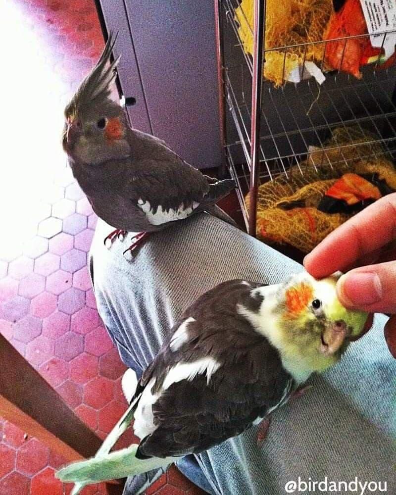 oiseaux pour appartement